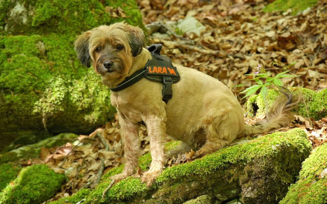Les habitudes du chien : comprendre le mode de vie de l'espèce canine